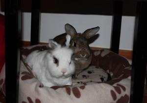 bunniesmand
